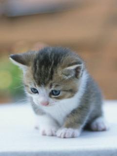 картинки кошки